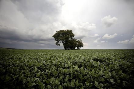 SOJA. El monocultivo de soja ha tenido consecuencias ambientales y sociales en países como Paraguay, Brasil o Argentina. Foto: Olmo Calvo/Sub. Coop.