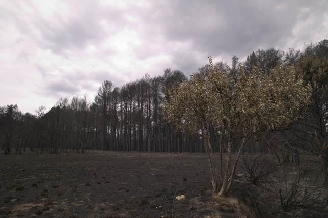 El borrador de la nueva Ley de Montes contempla la contrucción en los montes públicos quemados. / FOTO: Javier Galán.