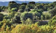 El Ayuntamiento quiere talar y construir mil viviendas en un bosque protegido. / Jaime del Val
